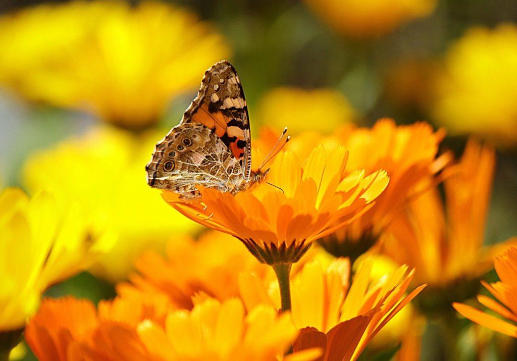 Naturopathes à Miège