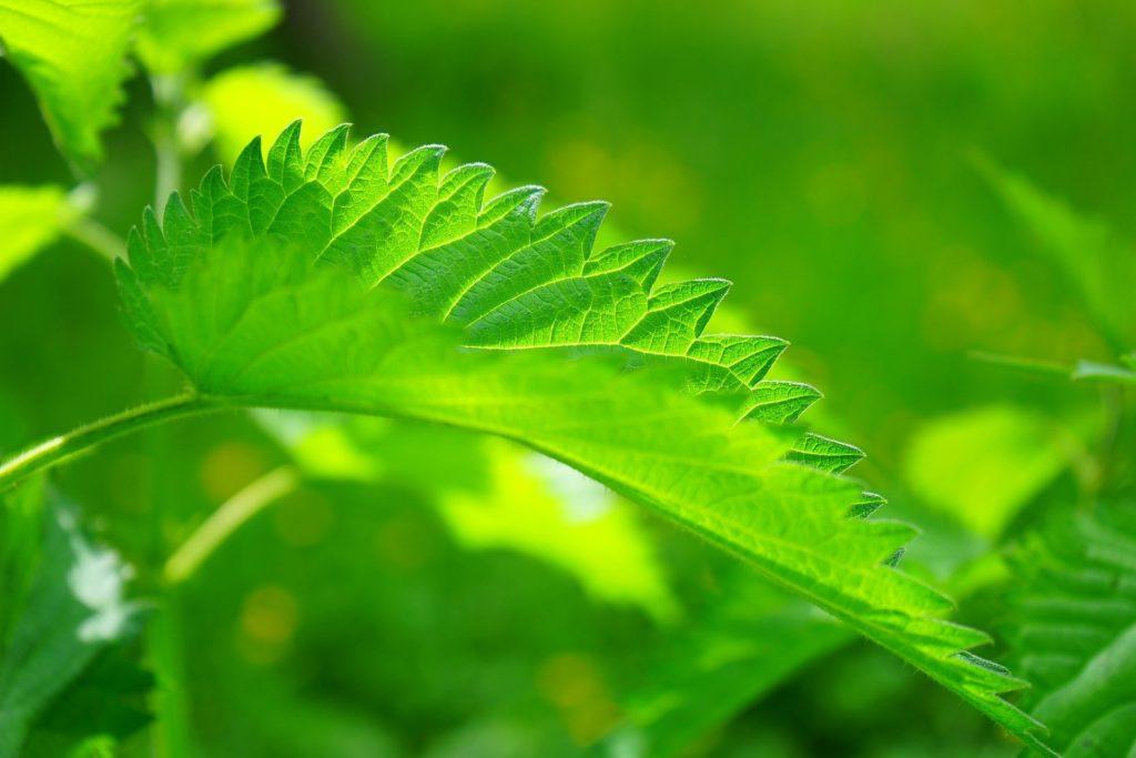 Naturopathes à Planfayon