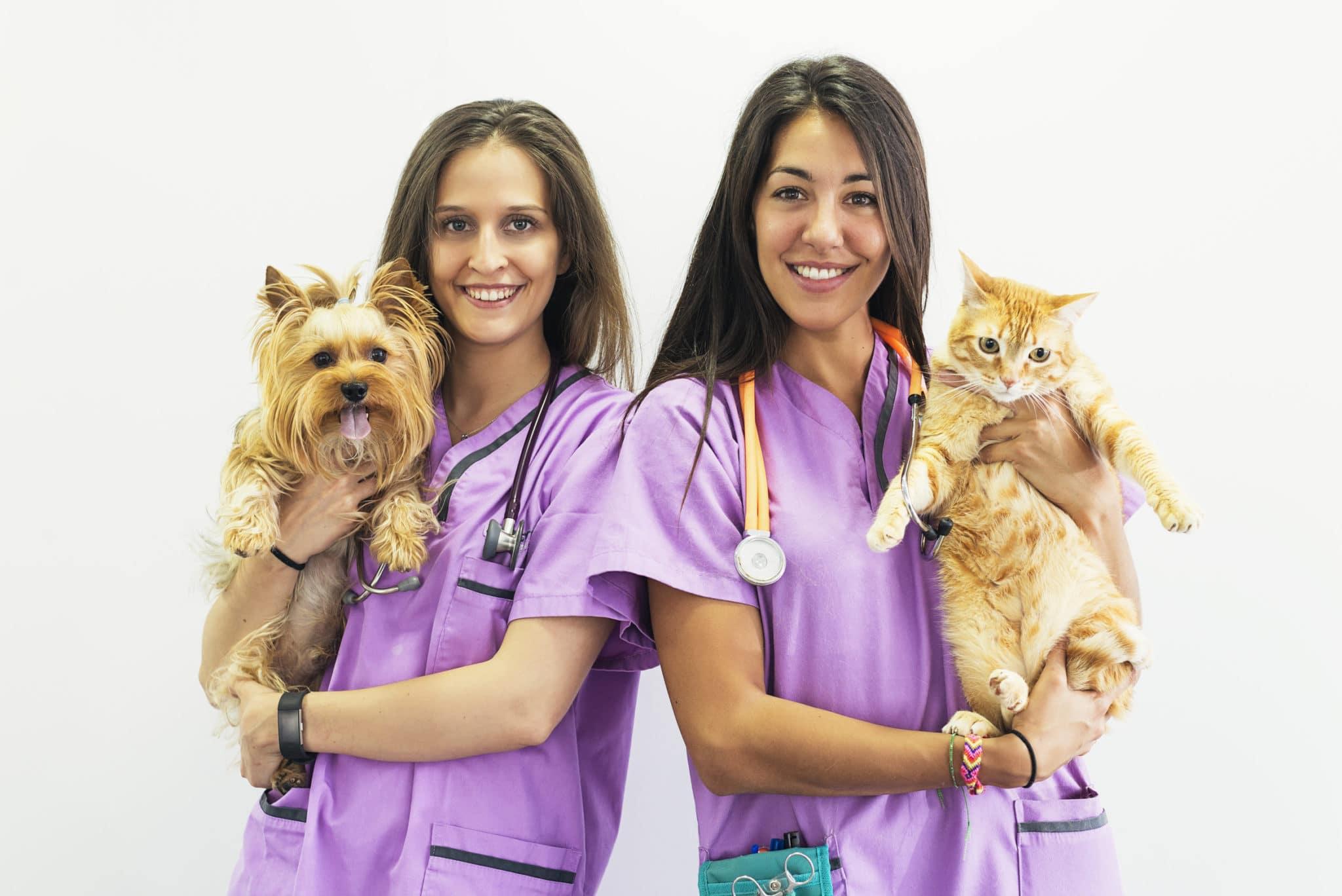 Assurances pour les animaux