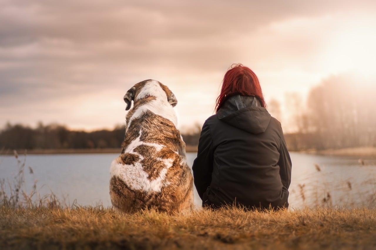Taxe sur les chiens supprimée à Genève